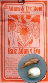 Pair Of Adam & Eve Roots